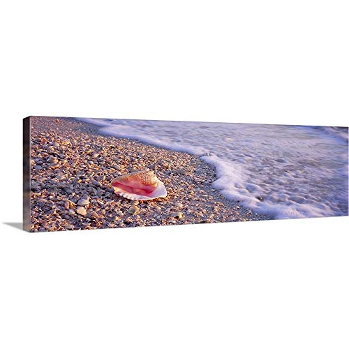 GREATBIGCANVAS Gallery-Wrapped Canvas Entitled Seashell on The Beach, Lovers Key State Park, Fort Myers Beach, Gulf of Mexico, Florida by 60