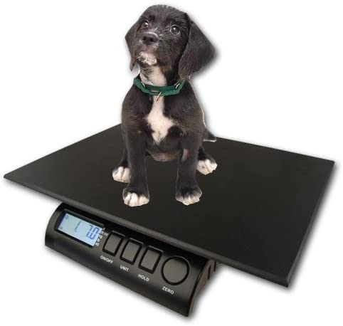 The Ultimate Dog Size Guide Dogsized