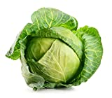 David's Garden Seeds Cabbage Dutch OS22101 (Green) 200 Organic Seeds