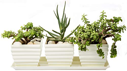 H Potter Window Box Planter Pots with Tray Outdoor Indoor Succulent Flower Herb Box for Home, Patio, Garden, Deck, Balcony Off-White Powder ()