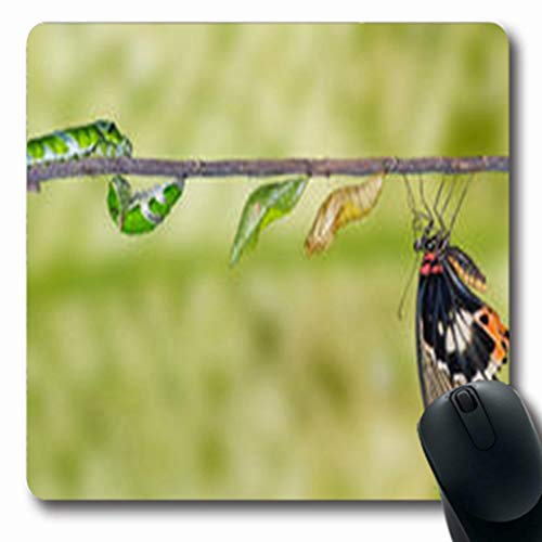 Swallowtail Life Cycle - Pandarllin Mousepads Swallowtail Life Cycle Great Mormon Bug Butterfly Caterpillar Wildlife Nature Oblong Shape 7.9 x 9.5 Inches Oblong Gaming Mouse Pad Non-Slip Rubber Mat