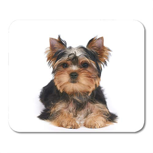 Adorable Yorkie - Emvency Mouse Pads Dog One Puppy of The Yorkshire Terrier Lies on White Small Yorkie Adorable Mousepad 9.5