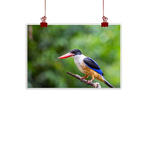 "duommhome Wall Art Decor Poster Painting Bird (Black-Capped Kingfisher Halcyon pileata) Perched on a Tree in The Garden Modern Minimalist Atmosphere 24"" Wx16 L"