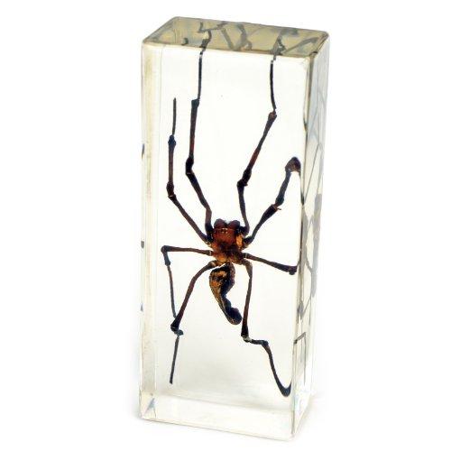 Spider Paperweight - Golden Orb-Web Spider Paperweight (1 5/8 x 4 3/8 x 1 1/8
