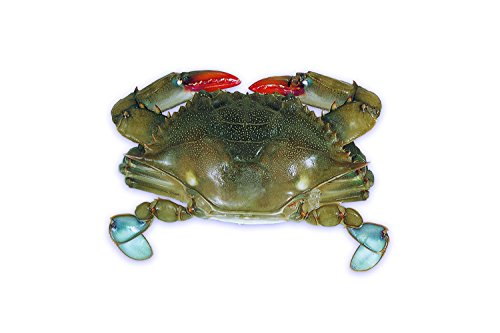 Handy Seafood Raw Domestic Soft Shell Crabs (12 Ct - Mediums) - Frozen