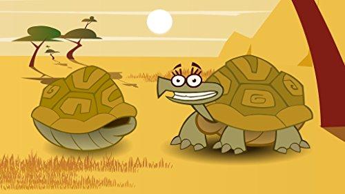 Tortoise - Shell Tortoise Buy