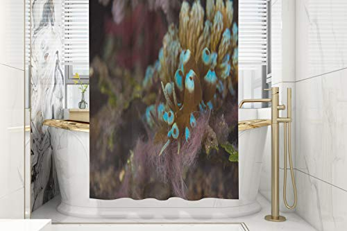 Grey Shower Curtain,Pamime Phyllodesmium Kabiranum Nudibranch Camouflaged As 66X72 Inches Bathroom Waterproof Eco-Friendly Polyester Shower Curtain Hooks