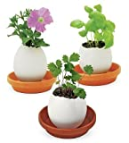 Crack and Grow Ceramic Egglings, in Basil by Noted