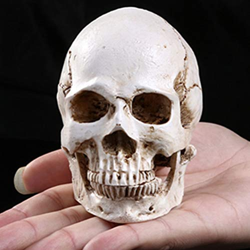 Culturemart Human Skull Replica Skeleton Model Funny Halloween Costumes House Scary Creepy Prop Masquerade Ornaments