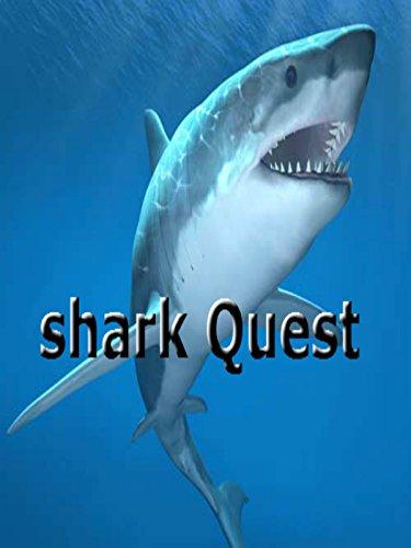 shark-quests