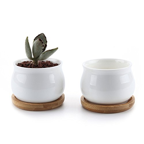 T4U 2.75 Inch Ceramic White Jar Shape Design Succulent Plant Pot/Cactus Plant Pot Flower Pot with Free Bamboo Tray/Container/Planter White Package 1 Pack of 2 (Ceramic White Jar)