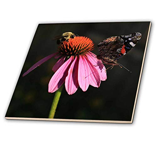 3dRose Stamp City - nature - Photo of a carpenter bee and painted lady butterfly on a coneflower. - 8 Inch Glass Tile (ct_308701_7)