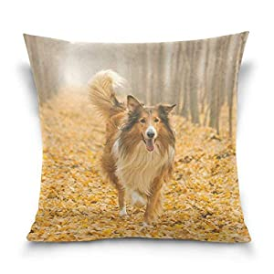 Rough Collie Dog in Outdoors Double-Sided Polyester Square Throw Pillow Case Cushion Cover for Sofa Bedroom Car Decor 20x20 Inch 2