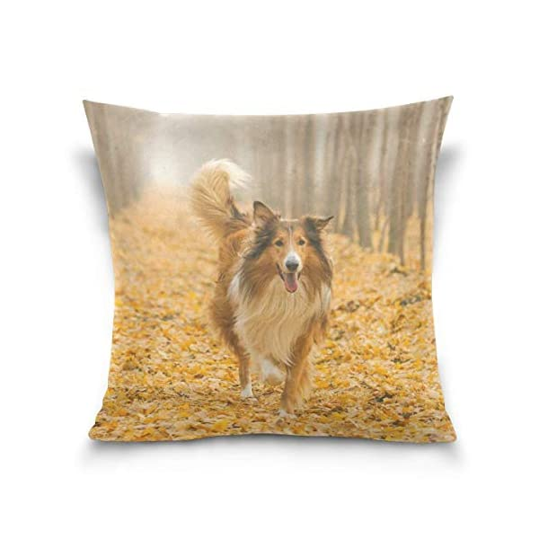 Rough Collie Dog in Outdoors Double-Sided Polyester Square Throw Pillow Case Cushion Cover for Sofa Bedroom Car Decor 20x20 Inch 1