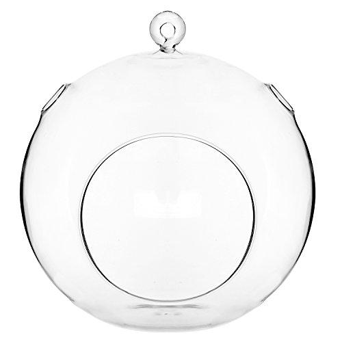 7 Inch Large Clear Glass Hanging Air Plant Terrarium Ball