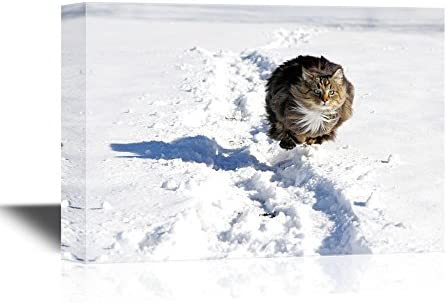 Wild Animal A Norwegian Forest Cat Runs Quickly Through The Snow