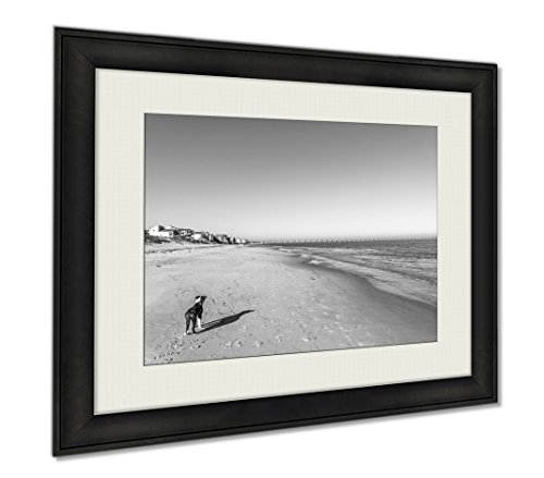 Ashley Framed Prints Bordeer Collie On Beach, Wall Art Home Decoration, Black/White, 34x40 (frame size), AG5655547 by Ashley Framed Prints