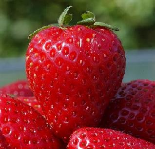 10 Heirloom Honeoye Strawberry Seeds