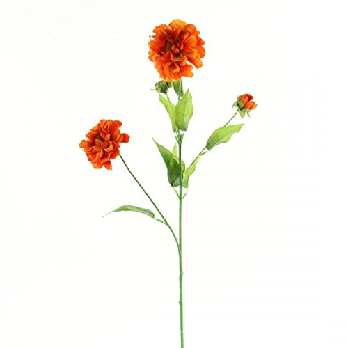 Orange Zinnia Flower (29