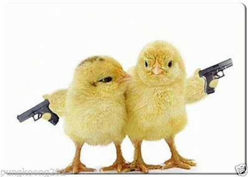 Armed chicks funny refrigerator magnet 3 1/2