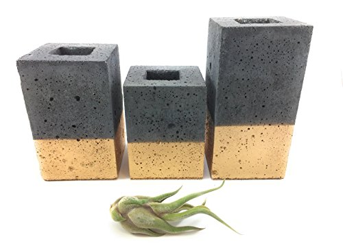 Square Concrete Succulent Planters / Air Plant Holder / Vase. (set of 3) CHARCOAL & GOLD. FREE SHIPPING! Ready To Ship!
