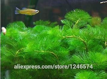 500 semillas mixta de tanque acuario de semillas Semillas de hierbas de agua de la planta acuática: Amazon.es: Jardín