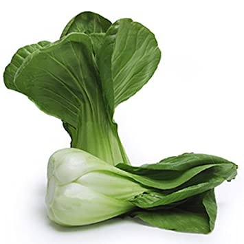 Amazoncom 1100 Baby Bok Choy Seeds Delicious Chinese Vegetable