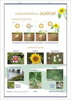 O Crecemento das Plantas / Clasificaci—n: Láminas de las Plantas Láminas de Ciencias: Amazon.es: Edigol Ediciones: Libros