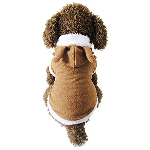 b0b4ab4b4574 desertcart Oman: Todaies Pet Clothes   Buy Todaies Pet Clothes ...