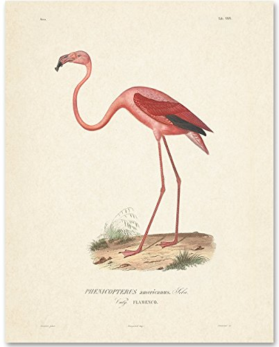 Pink Flamingo Bird Artwork - 11x14 Unframed Art Print - Great Home Decor (Prints Art Bird)