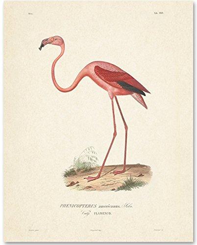 Pink Flamingo Bird Artwork - 11x14 Unframed Art Print - Great Home Decor (Prints Bird Art)