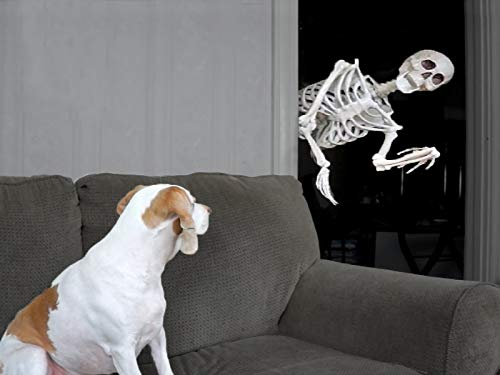 Halloween Prank: Skeleton Scares Dog -