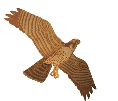 Jackite Assembled Peregrine Falcon Bird Kite, Wind Sock, Pest Deterrent