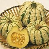 Squash - Sweet Dumpling - 15 Seeds
