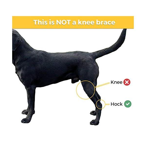 Dog-Leg-Brace-for-Hind-Leg