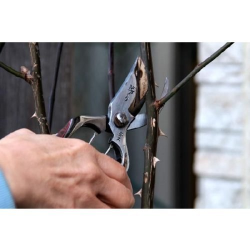 Pruning scissors to make flower (japan import)