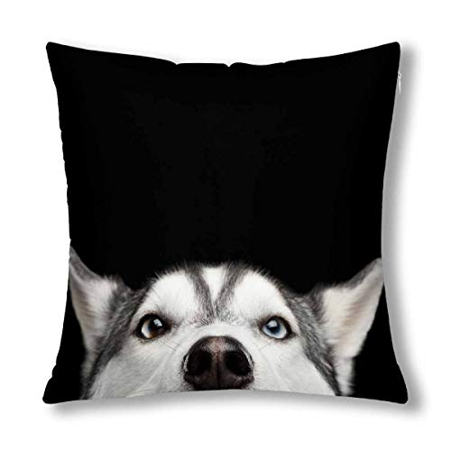 - InterestPrint Funny Close Up Head of Siberian Husky Dog with Blue Eyes Cushion Case Pillow Cover with 18x18 Inch, Zippered Throw Pillowcase for Bedroom Sofa Decor