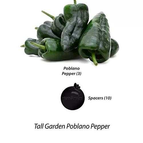 AeroGarden Poblano Pepper Seed Pod Kit (Tall Garden Kit)