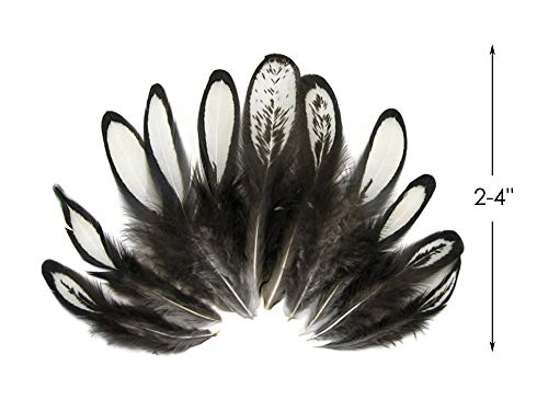 GREEN Polka Dot Guinea Fowl Wing quills Feathers 10 Pieces