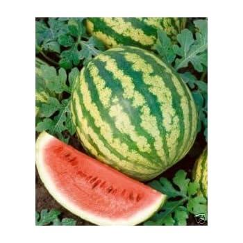 Extra Rare Sweet Watermelon /'/'Klondike Blue Ribbon/'/' ~30 Top Quality Seeds
