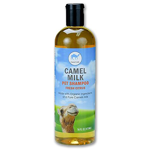 Camel Life/Camel Milk Pet Shampoo/all-natural hypoallergenic proprietary formula/cleans, heals, and protects pet skin/Dogs, Horses and Camels etc./Camel Milk Powder, Organic Aloe/16 oz