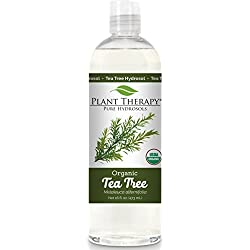 Plant Therapy Organic Tea Tree Hydrosol. (Flower Water, Floral Water, Hydrolats, Distillates) Bi-Product of Essential Oils. 16 oz.