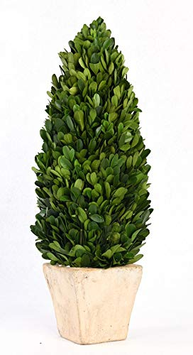 BoxWoodLand Real Boxwood Plant Wreath, Ball, Cone Tree, Wedding Home Decoration, Realistic Full Green Plant, Indoor Décor(Cone Tree, 22'') ()