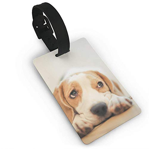 CURdfehgkde Luggage Tags - Beagles Wallpapers Travel Baggage ID Suitcase Labels Accessories 2.2 X 3.7 Inch Size 2.2 x 3.7 Inch