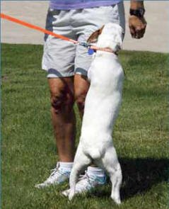Canine Innovations Pet Convincer 2 - Air Training Tool Dogs by Canine Innovations (Image #3)