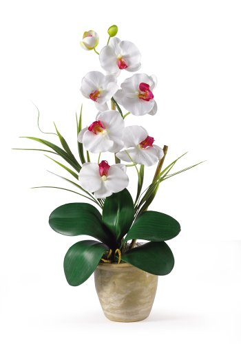 (Nearly Natural 1016-WH Phalaenopsis Silk Orchid Flower Arrangement, White)