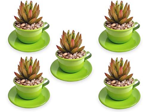 5 Mini Xícaras Verde De Suculenta Arranjo Flor Artificial