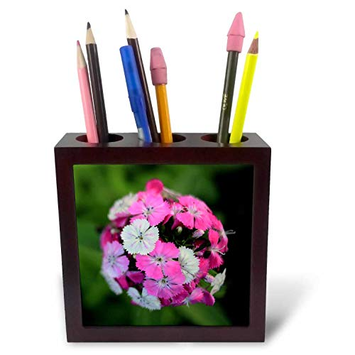 3dRose Stamp City - Flowers - Close up Photo of Dianthus barbatus - Sweet William in Shades of Pink. - 5 inch Tile Pen Holder (ph_308721_1) ()