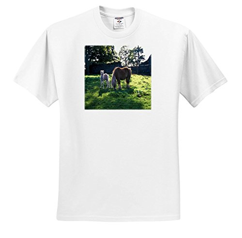 3dRose TDSwhite - Horse Equine Photos - Draft Mare Foal - T-Shirts - Adult T-Shirt Small - Foal Adult T-shirt