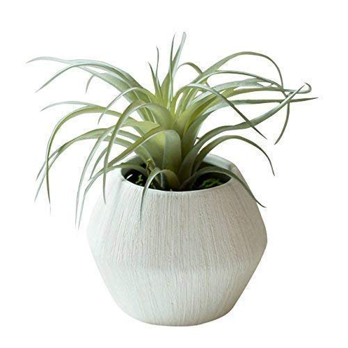 Ceramic Etched Vases - Small Faux Air Plant in Textured White Ceramic Planter - 6 x 6 Inches - Marmeda Decor Potted Artificial Tillandsia Plant in Etched, Lined Clay Pot - Global Modern Decor for Home or Office